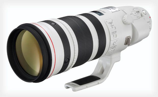 Canon EF 200-400 f/4L IS + EXT 1.4x